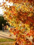 Autumn in Budapest-2 by poppit95miyu