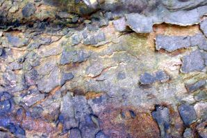 Stock texture - Flaking Bark by rockgem