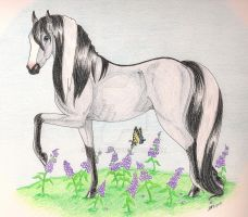 Hathien's Lavender by Rajial