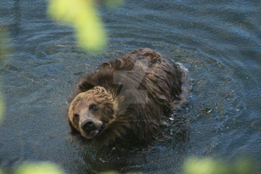 Goofy Grizzly by Lidgerbewis