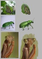 Insect Studies by kovah