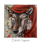 Canis lupus by screwbald