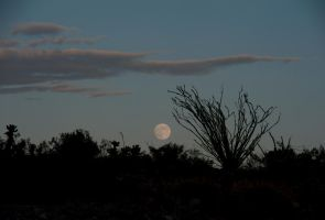 Moonrise Over Desert by jamezevanz