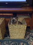 Basket Case by kayandjay100