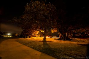 Night at the Park by Matty-nc