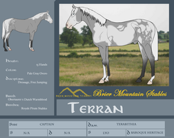 BMS Terran - Reference Sheet by TamHorse