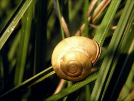 Little snail. by Umfridus
