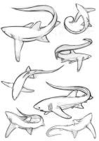 Tails tails...all tails these thresher sharks by sharkann