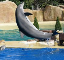 Wild animal stock 58 - dolphin by Momotte2stocks