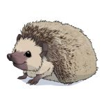 Hedgehog 1 by Mickeyila