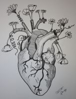 Anatomical Heart by apaige92
