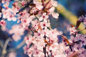 Spring flowers IV by quansie
