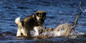 Playtime at the Lake V by Photolover68