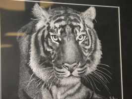 Tigress Scratch Art by ShadowChaos24