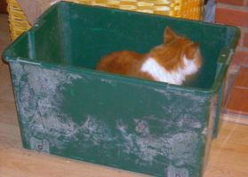 looby in the box by loobyloukitty