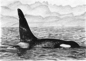 Orca by AzuriteInside