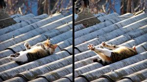 cat nap on the roof... by sabdesign