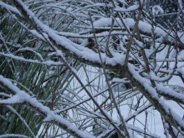 Snow on Branches by McDonkm