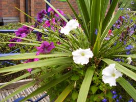 Purple and White flowers by haileysthelimit
