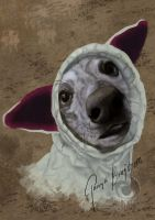Whippet in Homemade Earwarmer by RaggedVixen