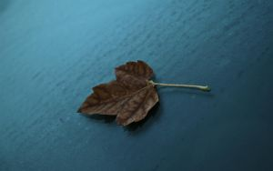 First Leaf of Fall 1280X800 by lowjacker