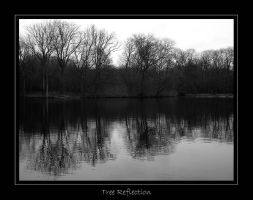 Belgium - Tree Reflection by lux69aeterna