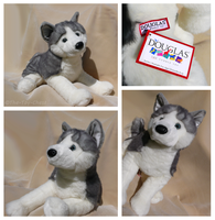Douglas Giant Floppy Dogs - Barker Husky by The-Toy-Chest