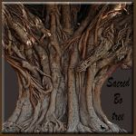 Trees and wood series. 5 by jennystokes