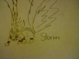 Storm The Quilava by Hearts-The-Eevee