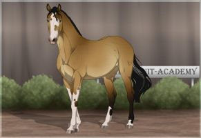 Traaker Import 84 |CLOSED by BRls-love-is-MY-Live