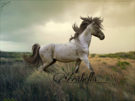 Arabella by Fera1029