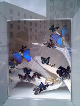 Butterfly Window Display on Rodeo (Blue) by LilinaFaerie