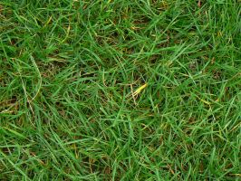 Grass Texture by catemate
