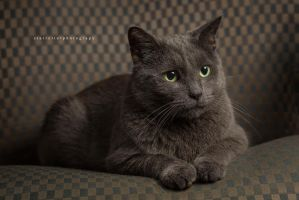 Henry with Softbox by infernalsedation