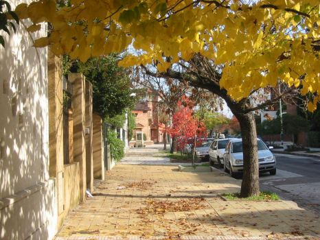 My street in the fall by Aftalion