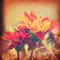 .flowers under sun. by multicolorlips