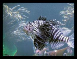 Lionfish by bittykitty