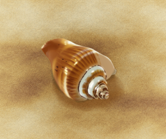 Seashell by dwsel