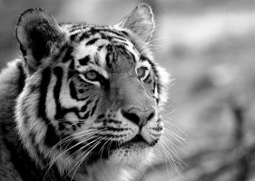 Black and White Stripes by pipecleanermonkey