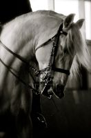 Whip My Hair. by EquusPhoto
