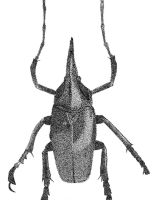 Stippled Beetle by head-space88