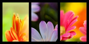 Petals Triptych by lonely-constellation