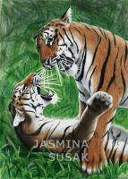 Tigers at Play by JasminaSusak