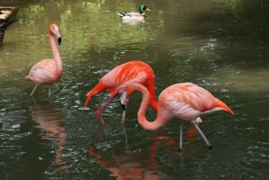 view  to flamingos 5 by ingeline-art