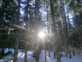 sun shining through pines by kolishtikovich