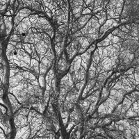 branches by DemonioHorrible