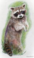 Raccoon by AnnaShell