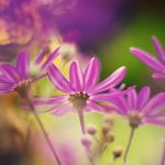 vivid colours by Laura1995