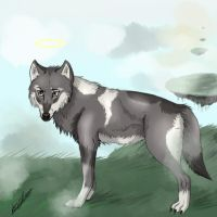 Wolf by amziss