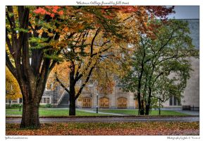 Whitman College framed by fall by yellowcaseartist